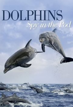 Dolphins: Spy in the Pod