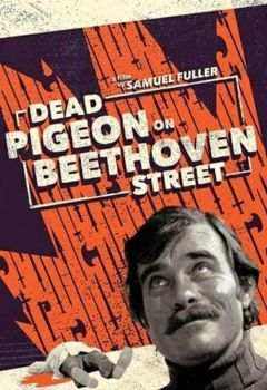 Tote Taube in der Beethovenstraße